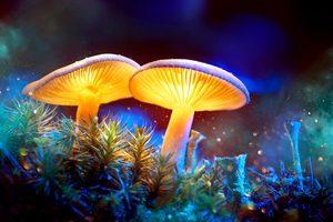magic mushroom retreats