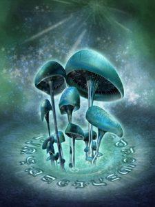 magic mushroom ceremony