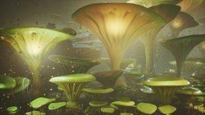 legal magic mushroom retreat
