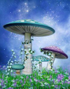 image magic mushroom retreat